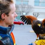 Madera Downtown Association Crow Abatement Program with Integrated Avian Solutions